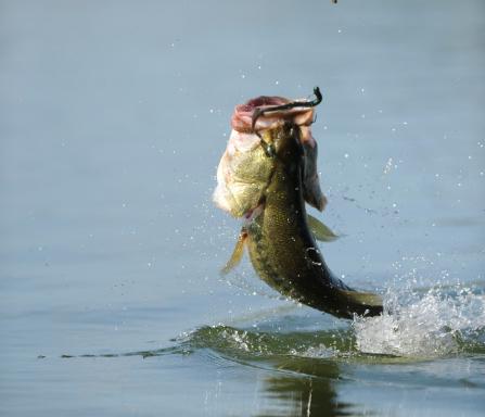 bass fishing season